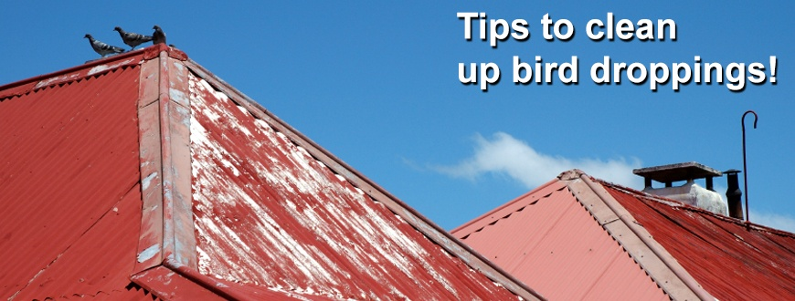 Bird_Dropping_Cleanup_Tips_870x330