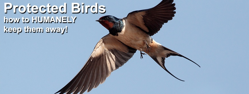 Protected_Birds_870x330