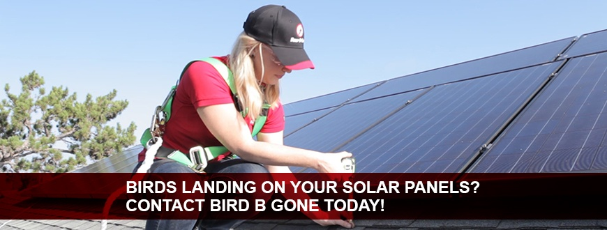 Solar_Panel_Deterrent_homeowners_Landing_Page_870x330