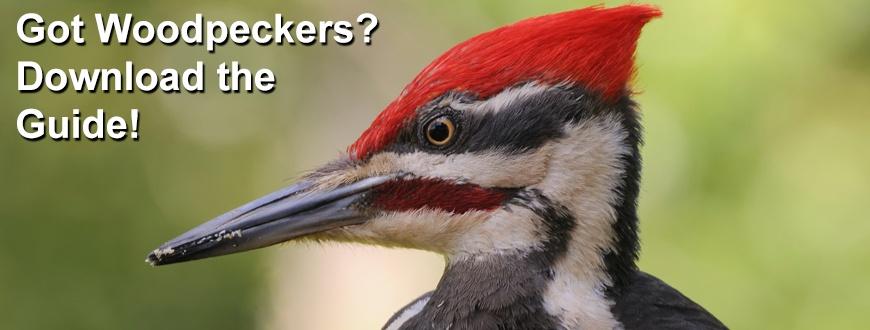 Woodpecker_Guide_870x330
